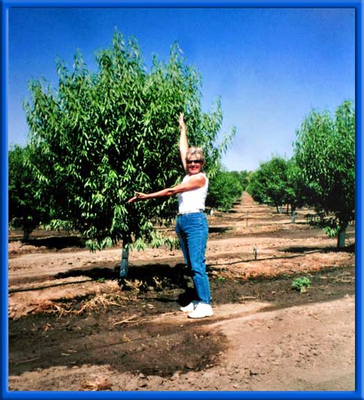 NEW ALMOND TREES - 7 MONTHS LATER - NONPAREIL SANDY/CLAY LOAM SOIL