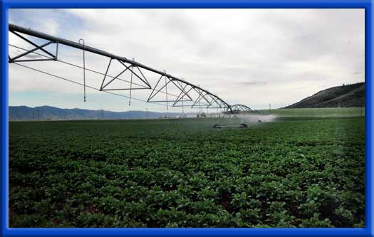 UNIFORMITY ACROSS ENTIRE FIELD - CLEAN PIPES AND SPRINKLERS ROW CROPS AND VEGETABLES