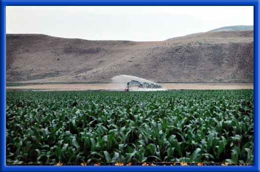 ROW CROPS AND CIRCLE PIVOT - UNIFORM AND INCREASED GROWTH CLEAN PIPES AND SPRINKLERS